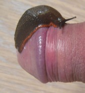 Free porn pics of More slugs in my pee hole 1 of 11 pics